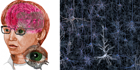 grady's brain