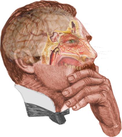 watson's brain_sinuses